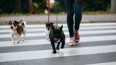 Dog Walking Business Insurance: Explained