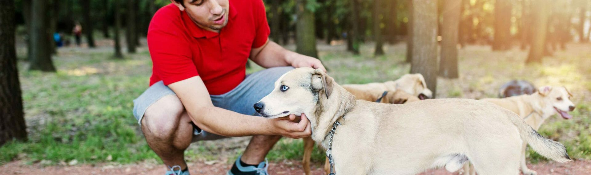 How much does Dog Walking Insurance cost?
