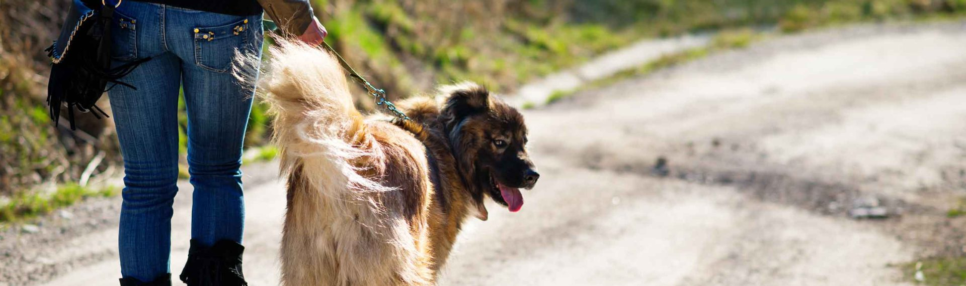 What is Dog Sitting Insurance?