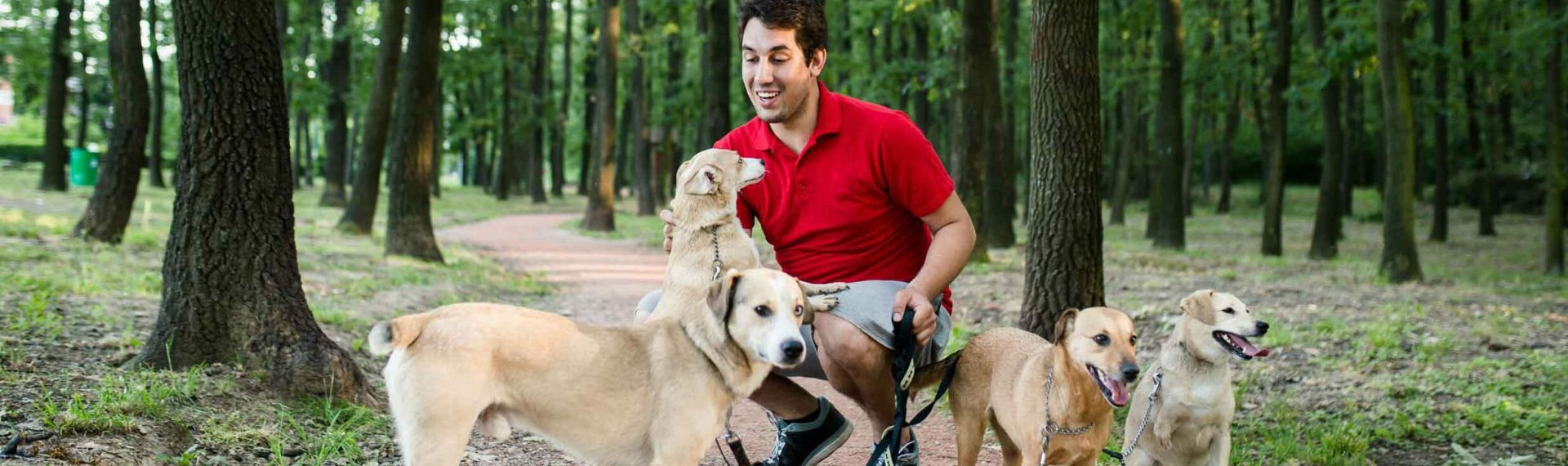 What Insurance do Pet Sitters need?