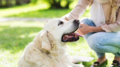 Your Guide to Pet Sitting Insurance