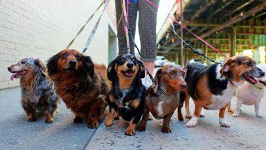 Dog Walker's Insurance